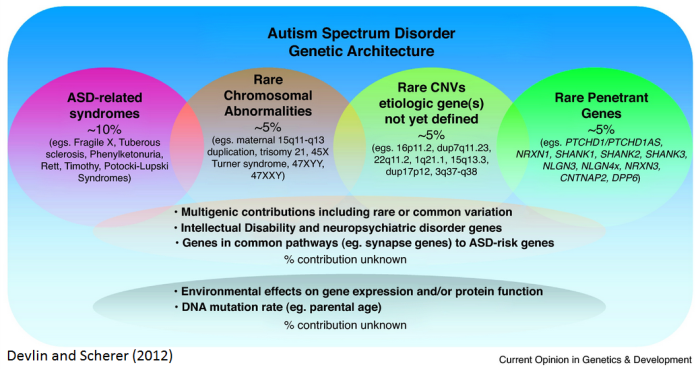 Overview of syndromic autism spectrum disorders